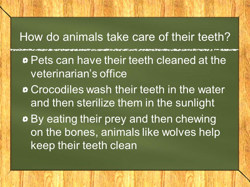 How do animals take care of their teeth