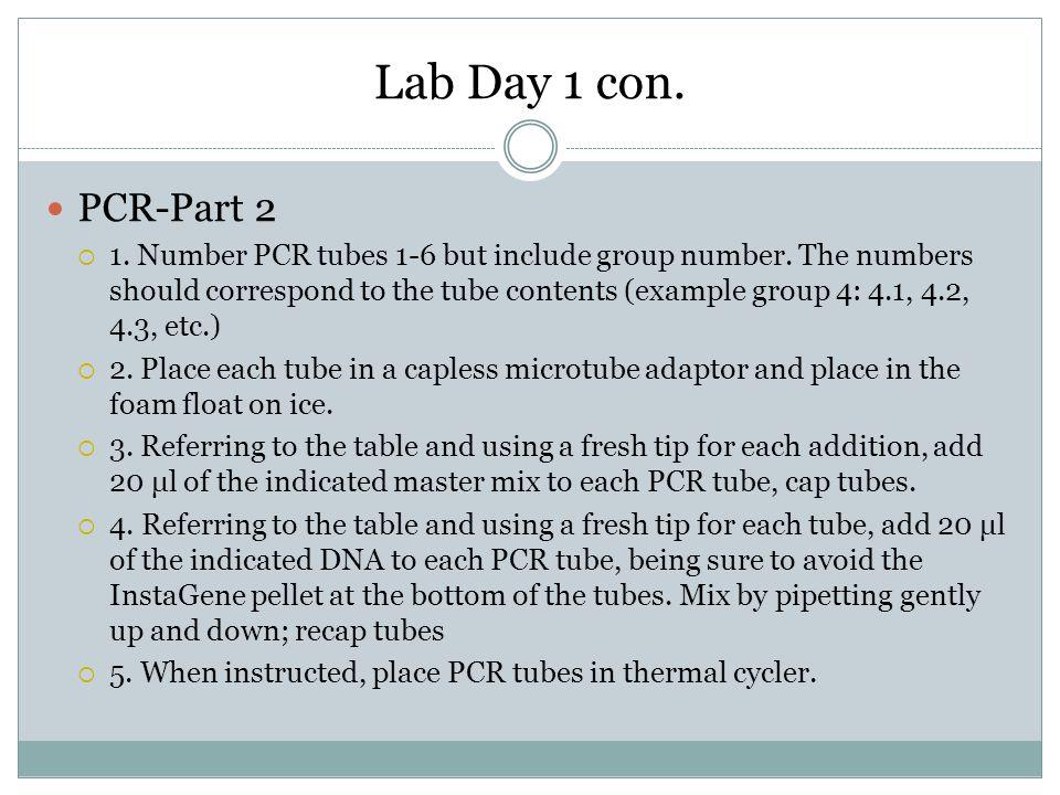 Lab Day 1 con. PCR-Part 2.