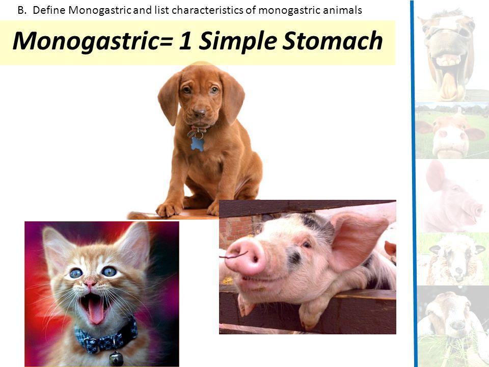 Monogastric= 1 Simple Stomach