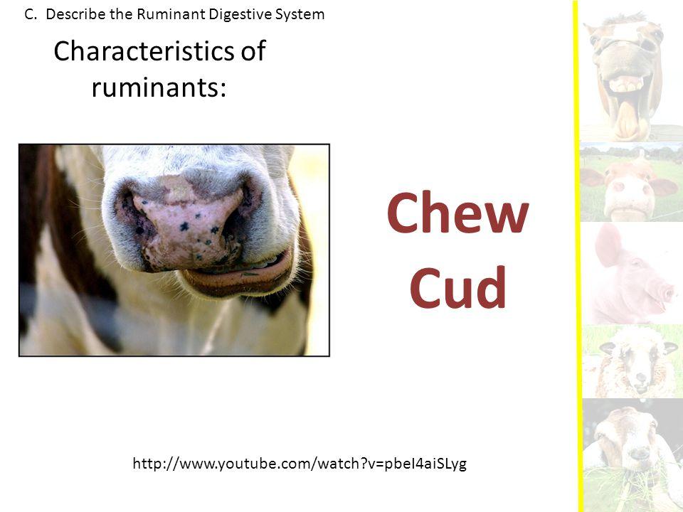 Characteristics of ruminants: