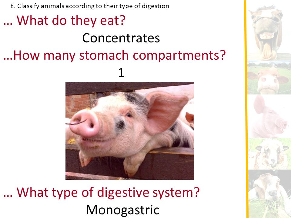 …How many stomach compartments 1