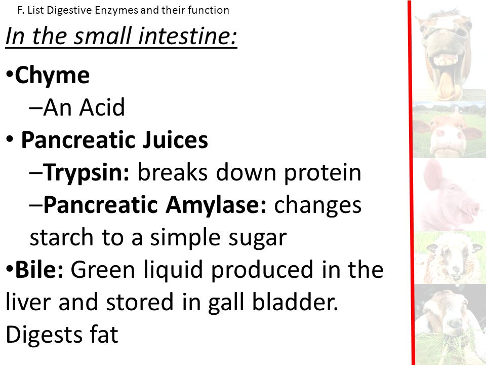 In the small intestine: Chyme An Acid Pancreatic Juices