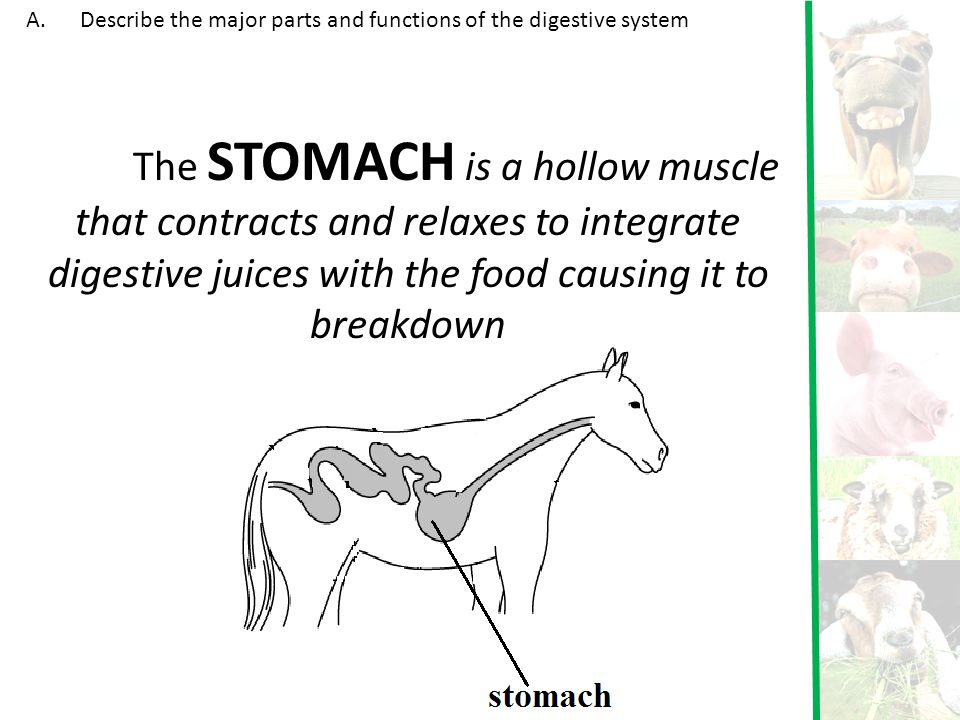 Describe the major parts and functions of the digestive system