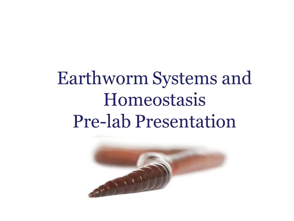 Earthworm Systems and Homeostasis