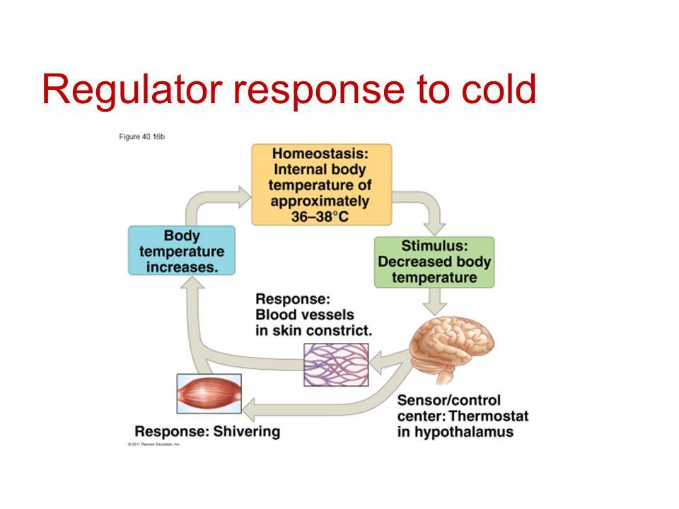 Regulator response to cold