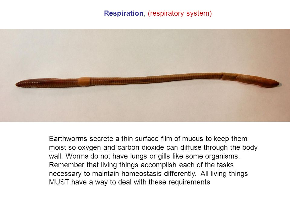 Respiration, (respiratory system)