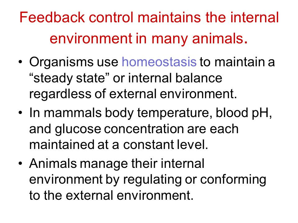 Feedback control maintains the internal environment in many animals.