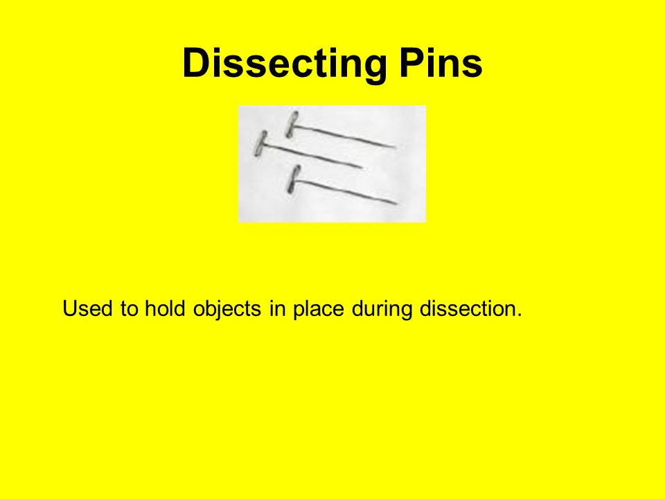 Dissecting Pins Used to hold objects in place during dissection.