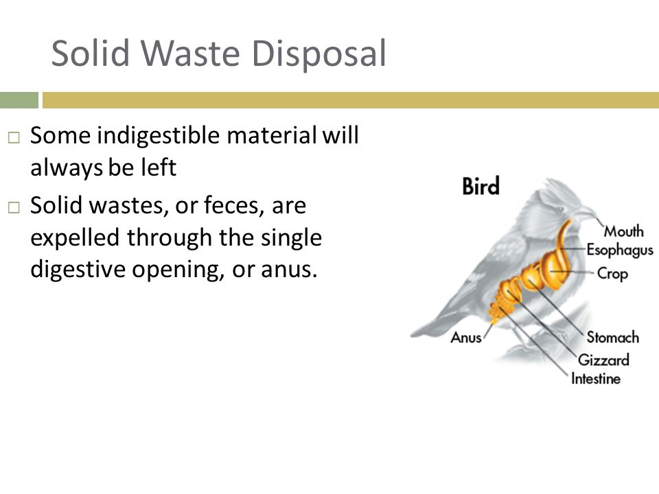 Solid Waste Disposal Some indigestible material will always be left