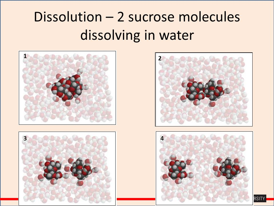 Dissolution – 2 sucrose molecules dissolving in water