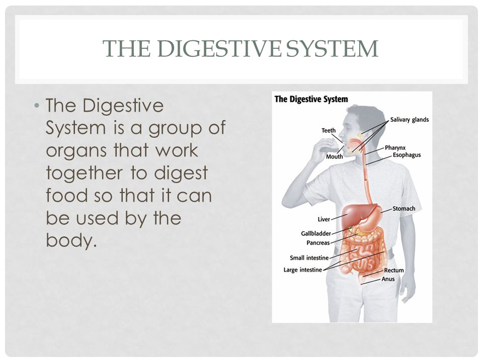 The Digestive System The Digestive System is a group of organs that work together to digest food so that it can be used by the body.