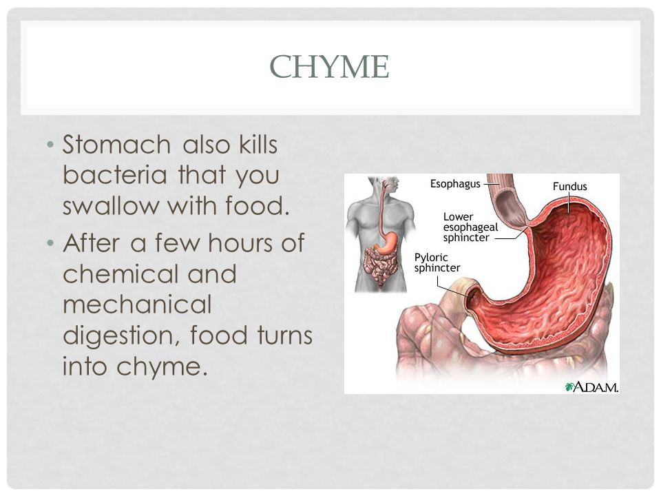 Chyme Stomach also kills bacteria that you swallow with food.