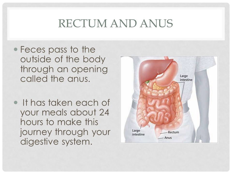 Rectum and Anus Feces pass to the outside of the body through an opening called the anus.