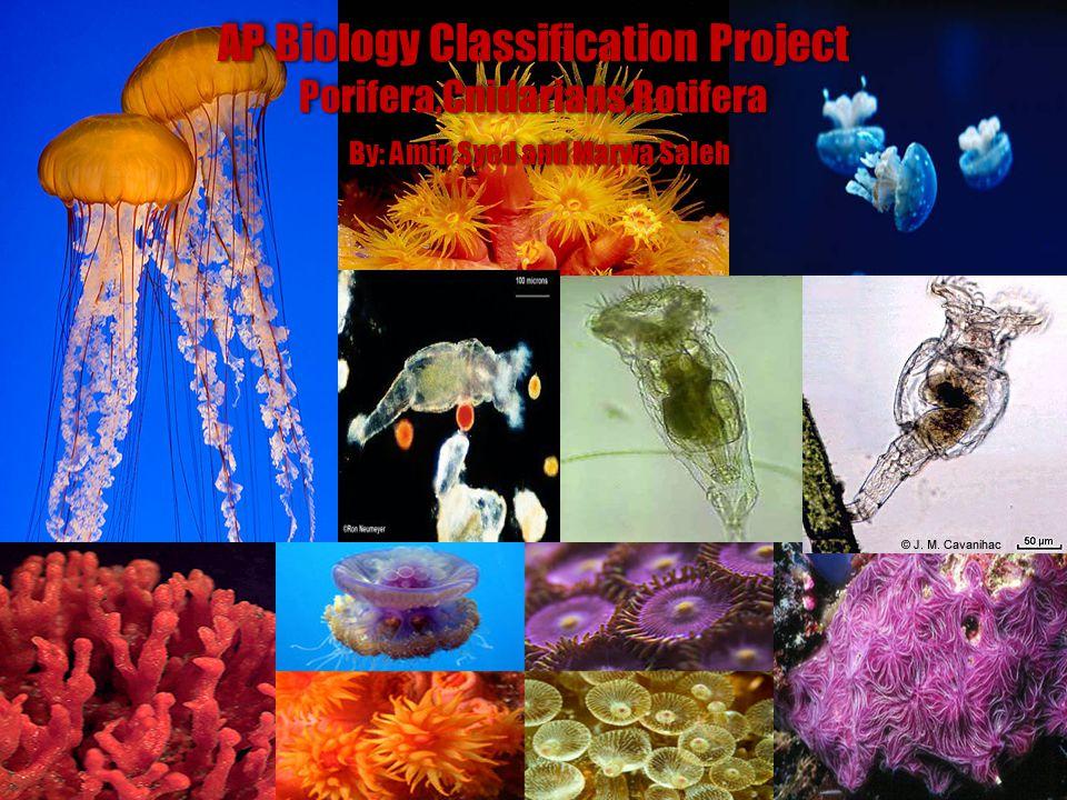 AP Biology Classification Project Porifera,Cnidarians,Rotifera