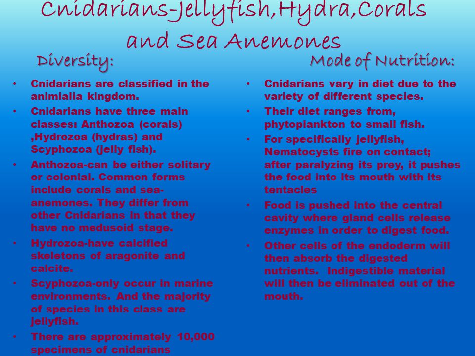 Cnidarians-Jellyfish,Hydra,Corals and Sea Anemones