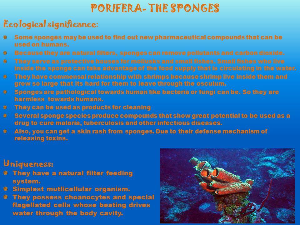 Ap Biology Classification Project Porifera Cnidarians