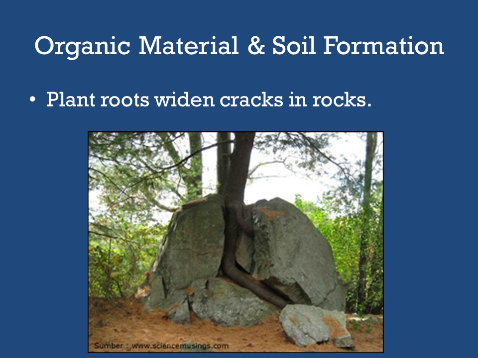 Organic Material & Soil Formation