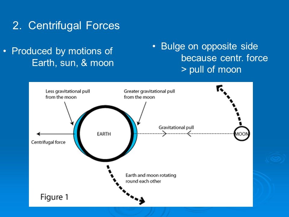 2. Centrifugal Forces Bulge on opposite side because centr.