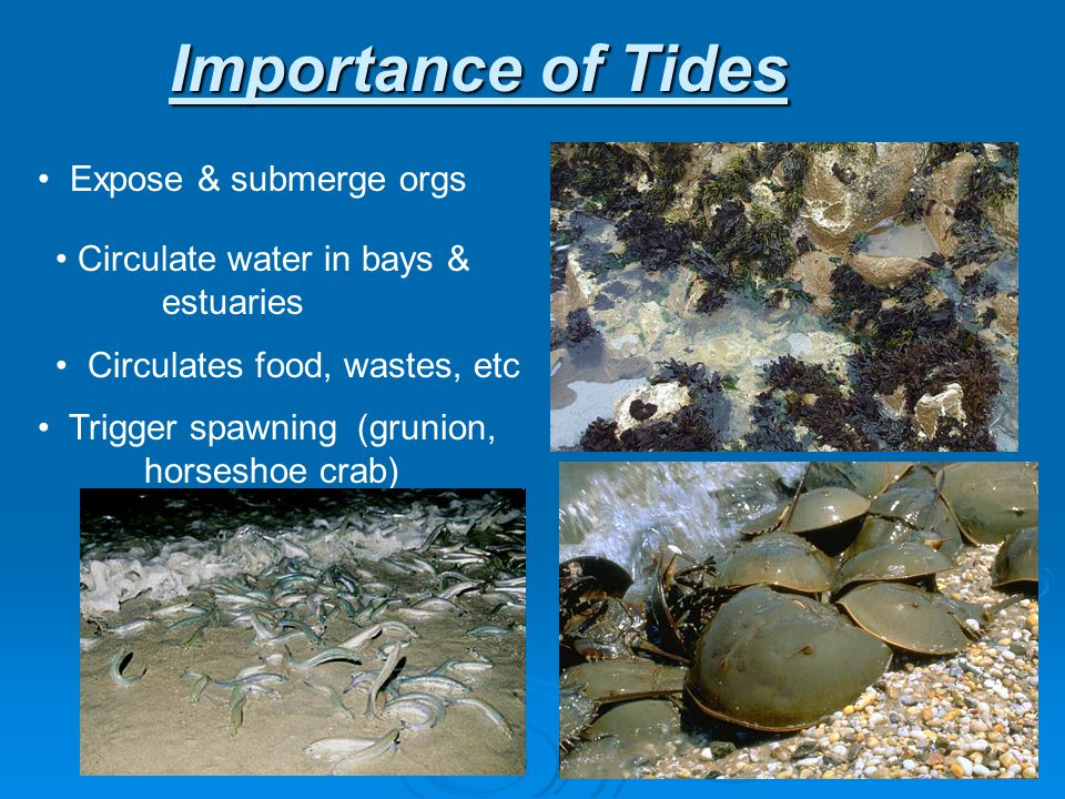 Importance of Tides Expose & submerge orgs