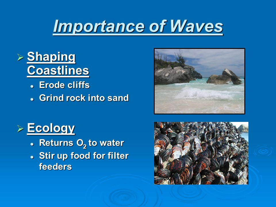 Importance of Waves Shaping Coastlines Ecology Erode cliffs
