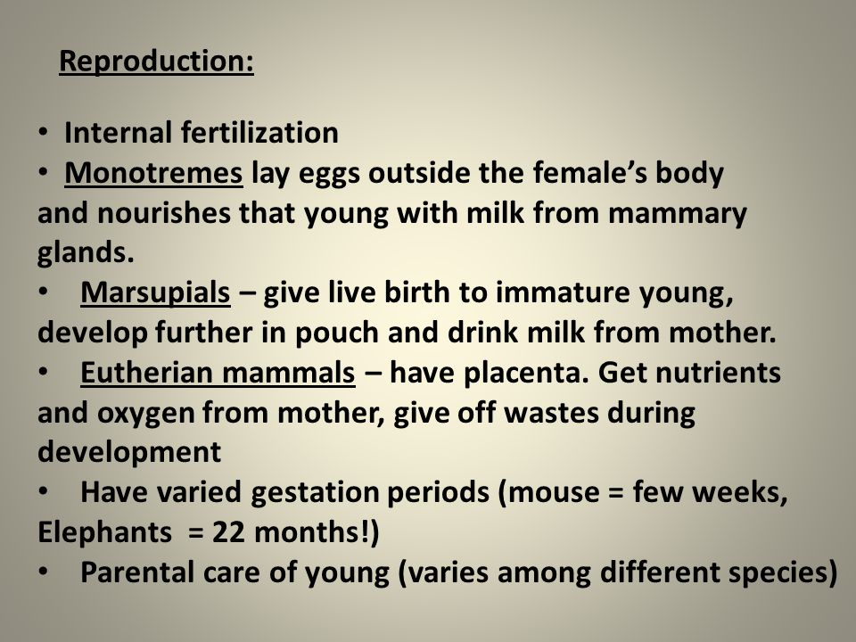 Reproduction: Internal fertilization. Monotremes lay eggs outside the female's body. and nourishes that young with milk from mammary.