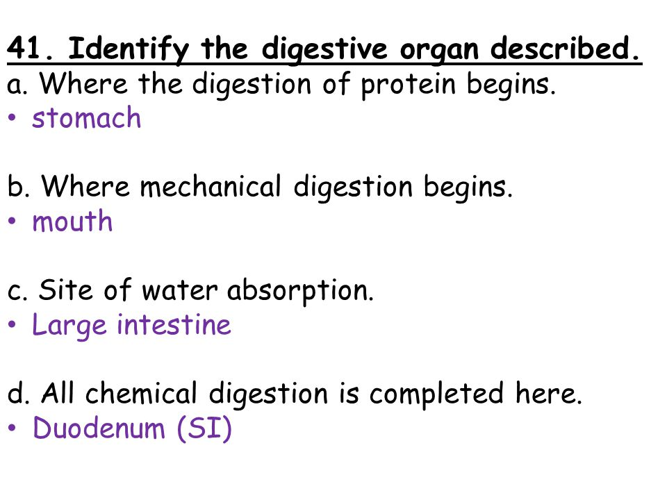 41. Identify the digestive organ described.