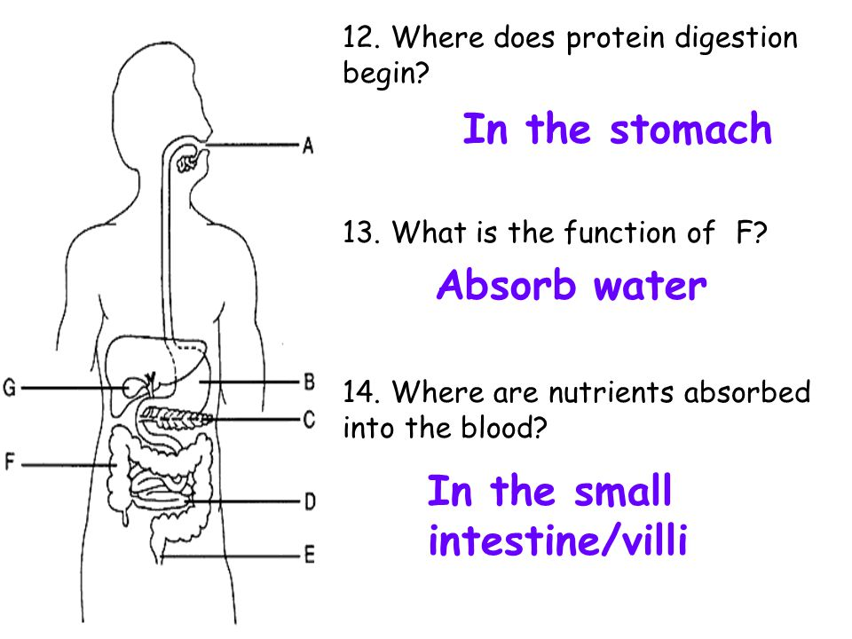 In the small intestine/villi