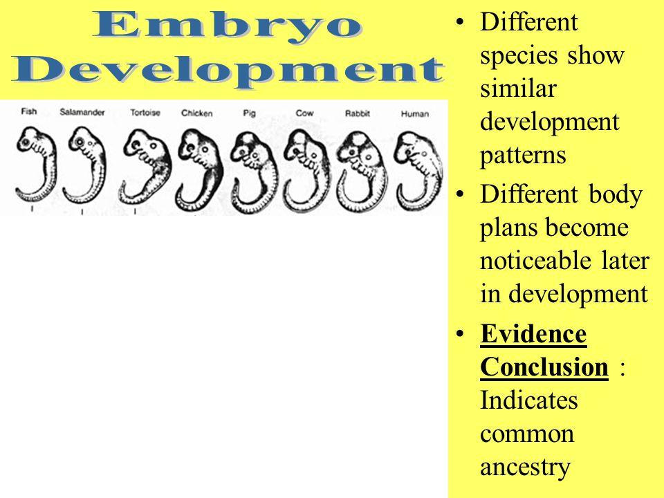 Embryo Development Different species show similar development patterns