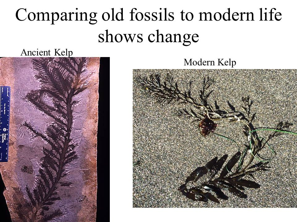 Comparing old fossils to modern life shows change
