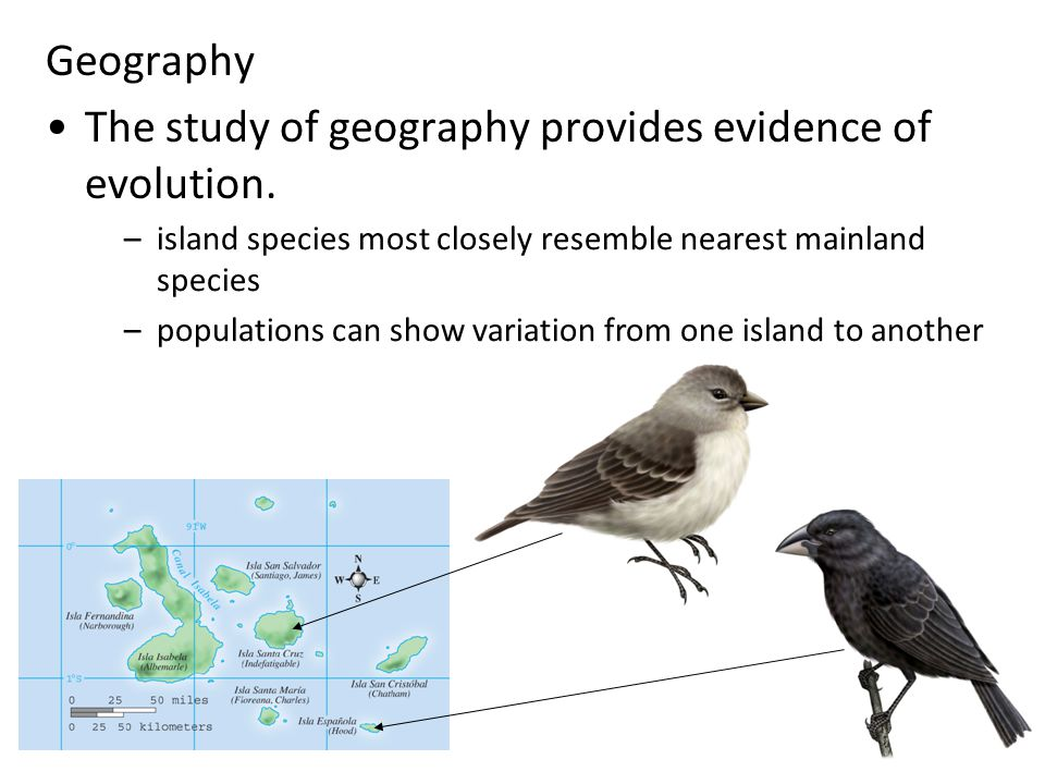 The study of geography provides evidence of evolution.