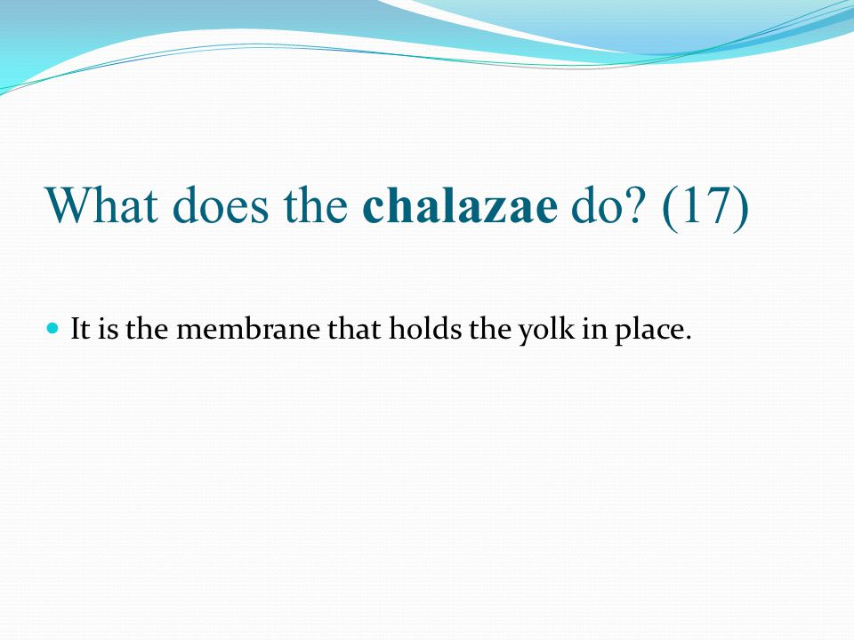 What does the chalazae do (17)