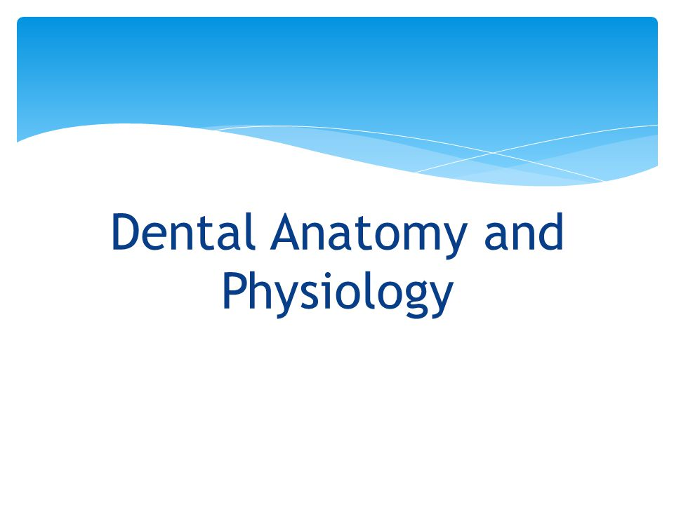 Dental Anatomy and Physiology