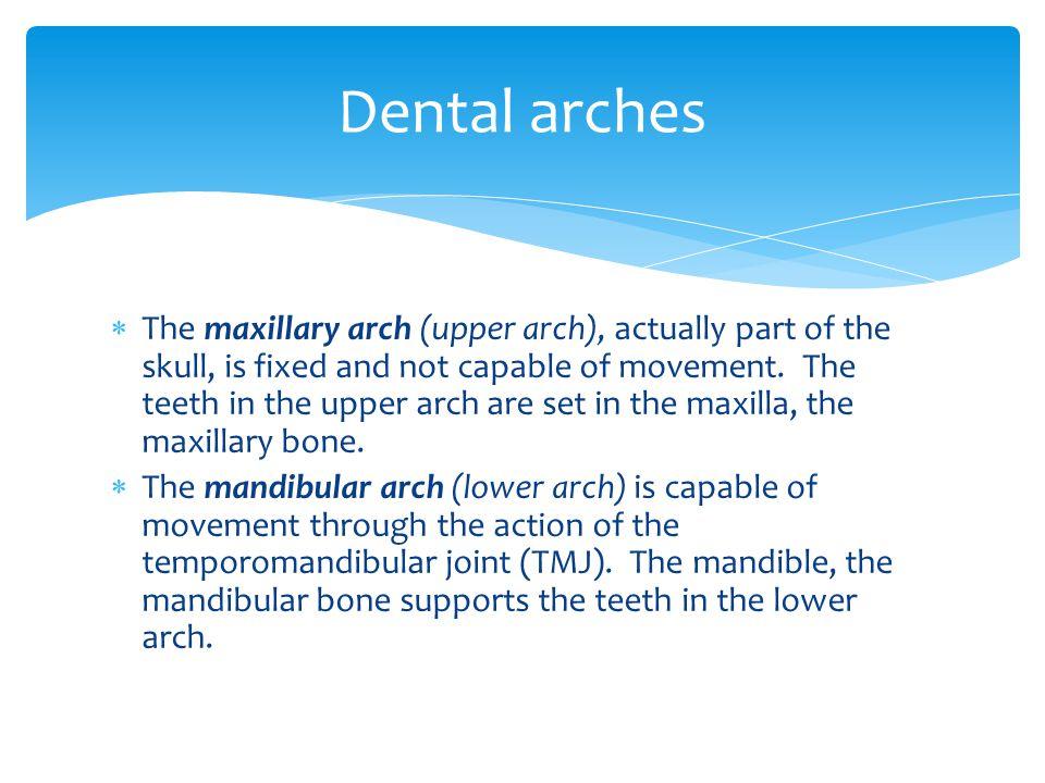Dental arches
