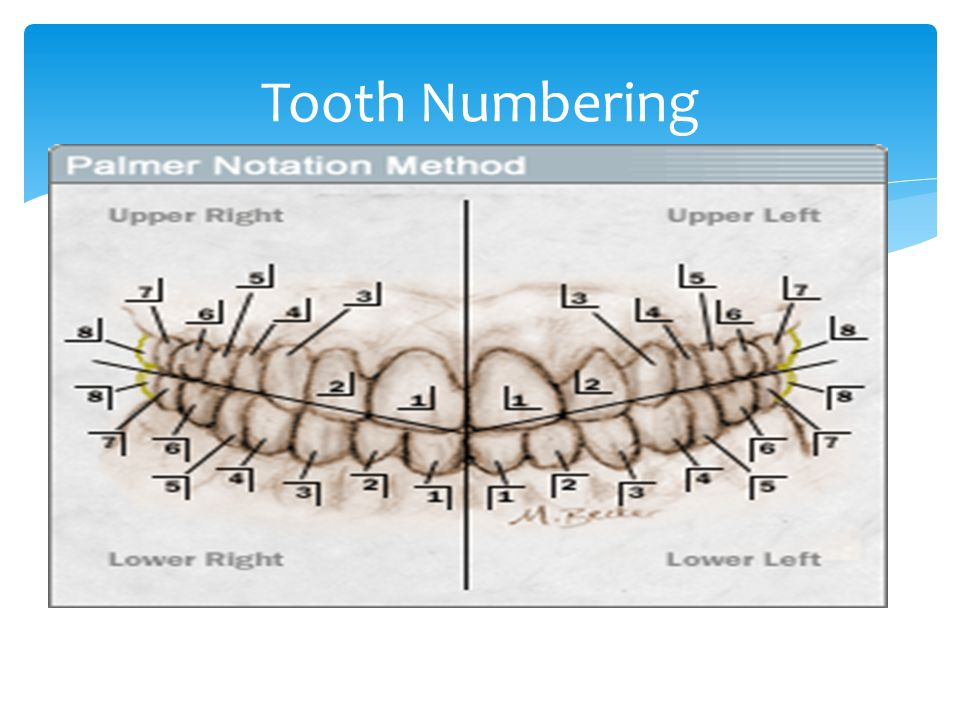 Tooth Numbering