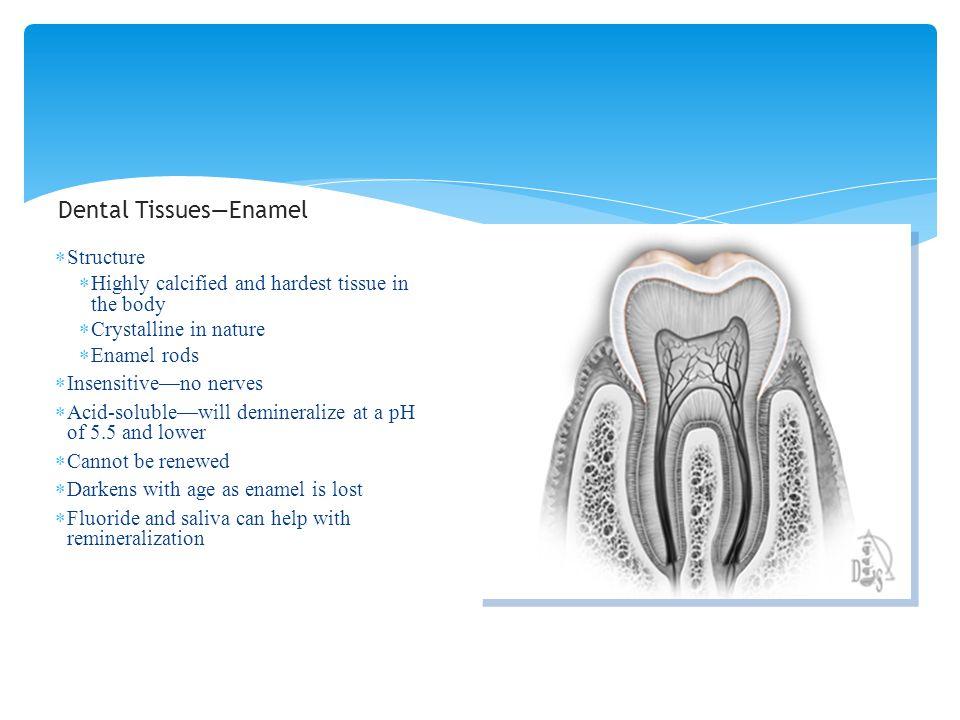Dental Tissues—Enamel
