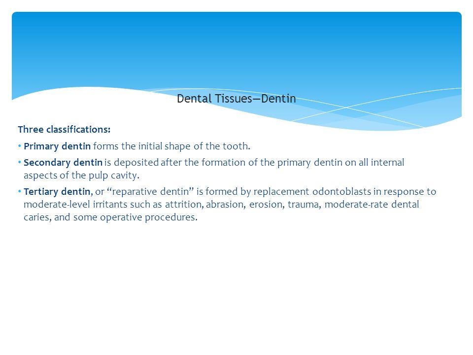 Dental Tissues—Dentin