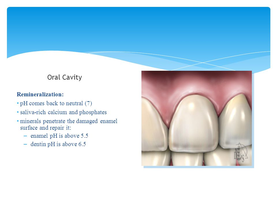 Oral Cavity Remineralization: pH comes back to neutral (7)