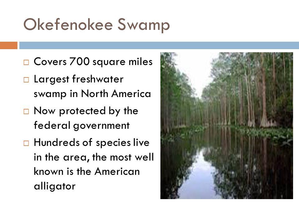 Okefenokee Swamp Covers 700 square miles