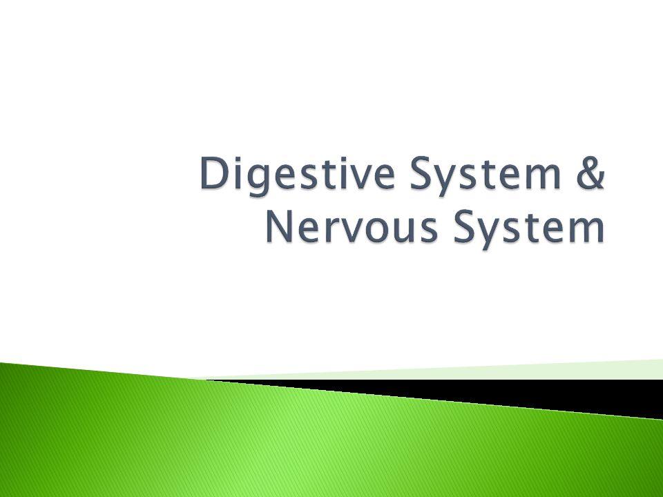 Digestive System & Nervous System