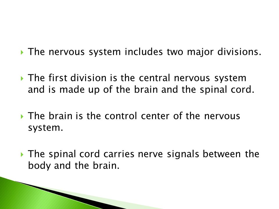 The nervous system includes two major divisions.