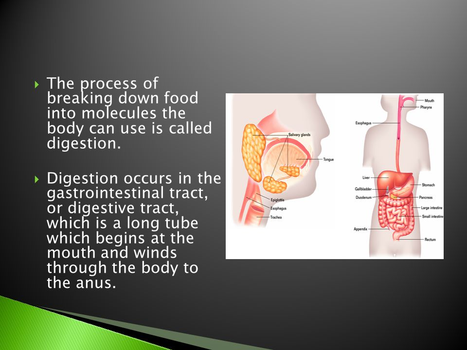 The process of breaking down food into molecules the body can use is called digestion.