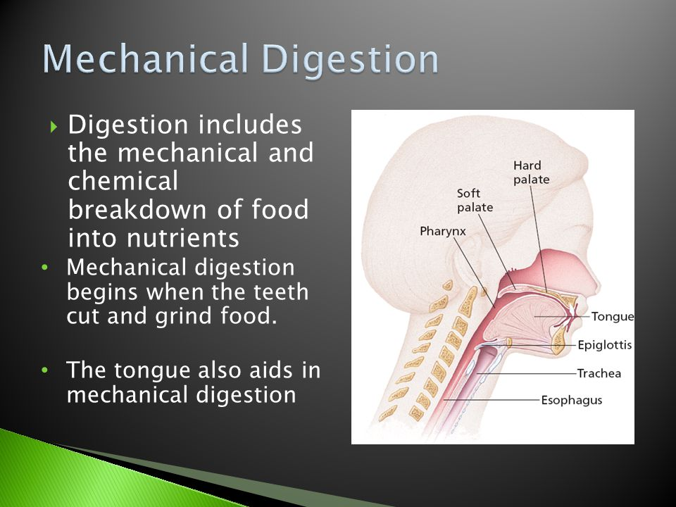 Mechanical Digestion Digestion includes the mechanical and chemical breakdown of food into nutrients.