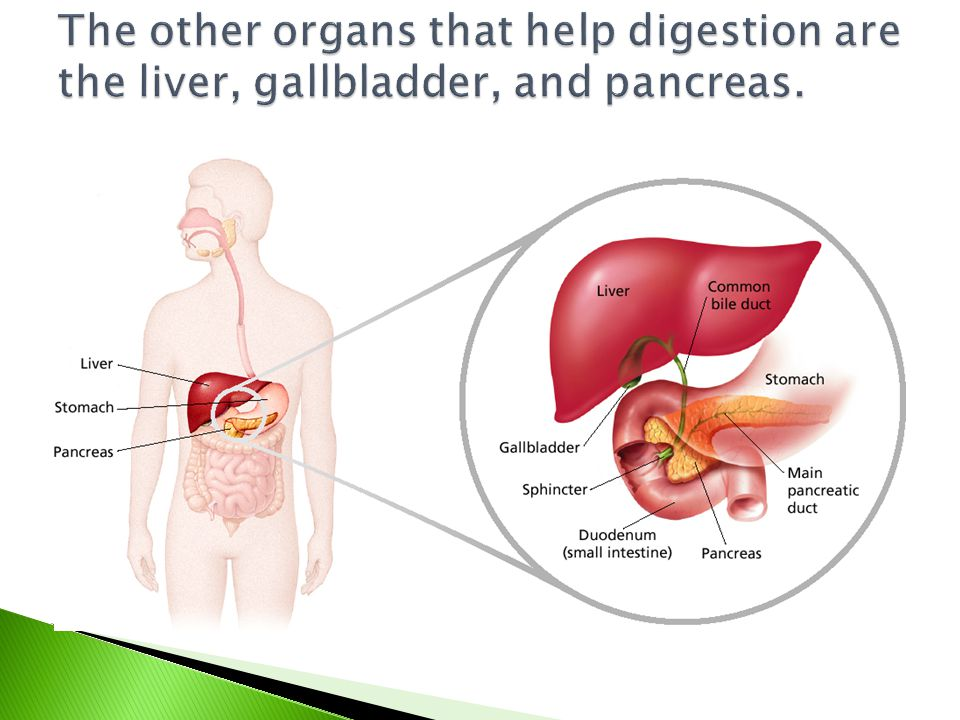 The other organs that help digestion are the liver, gallbladder, and pancreas.
