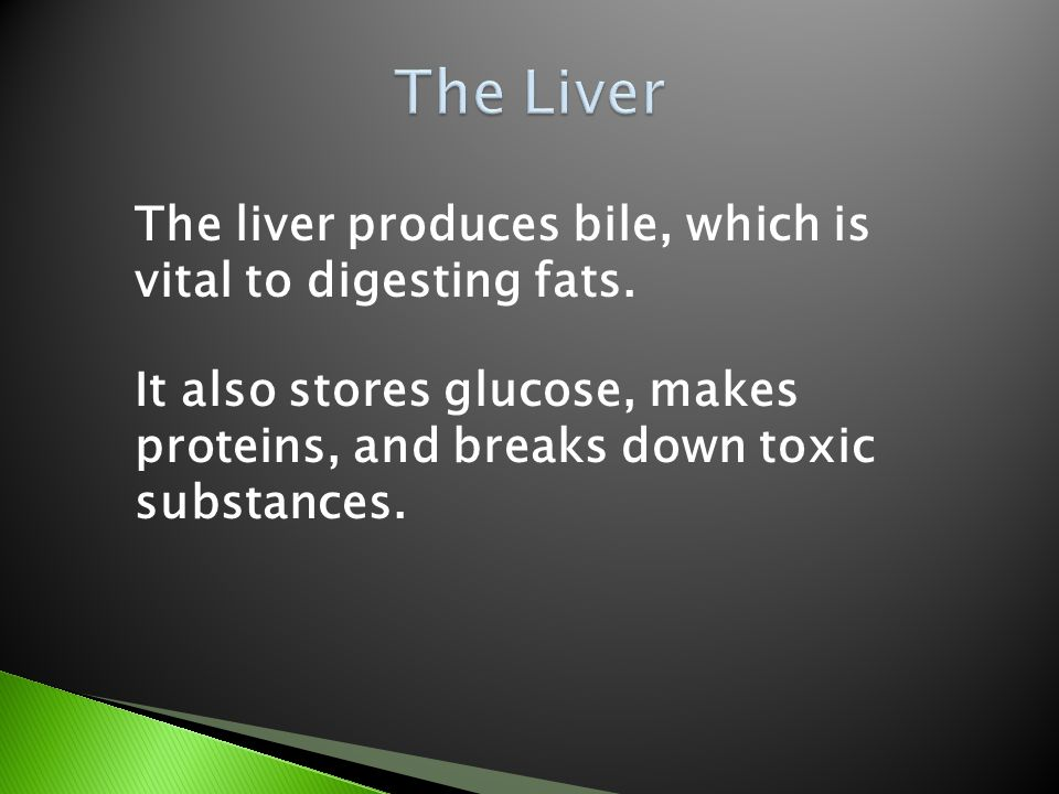 The Liver The liver produces bile, which is vital to digesting fats.