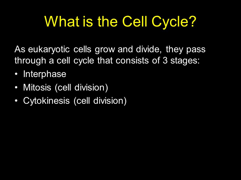 What is the Cell Cycle As eukaryotic cells grow and divide, they pass through a cell cycle that consists of 3 stages: