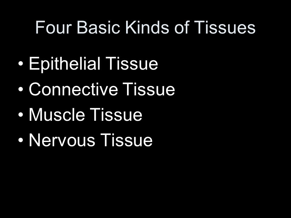 Four Basic Kinds of Tissues