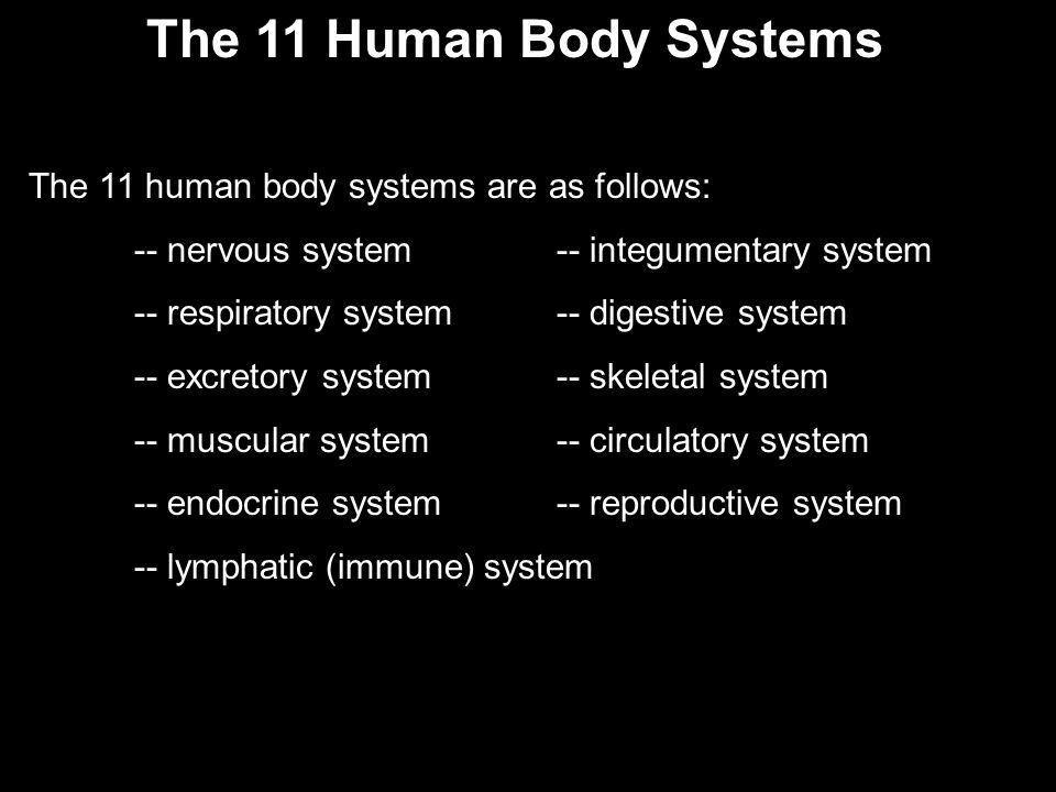 The 11 Human Body Systems The 11 human body systems are as follows: