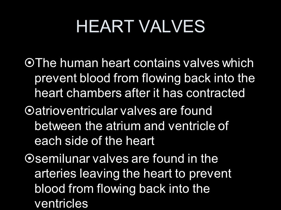 HEART VALVES The human heart contains valves which prevent blood from flowing back into the heart chambers after it has contracted.