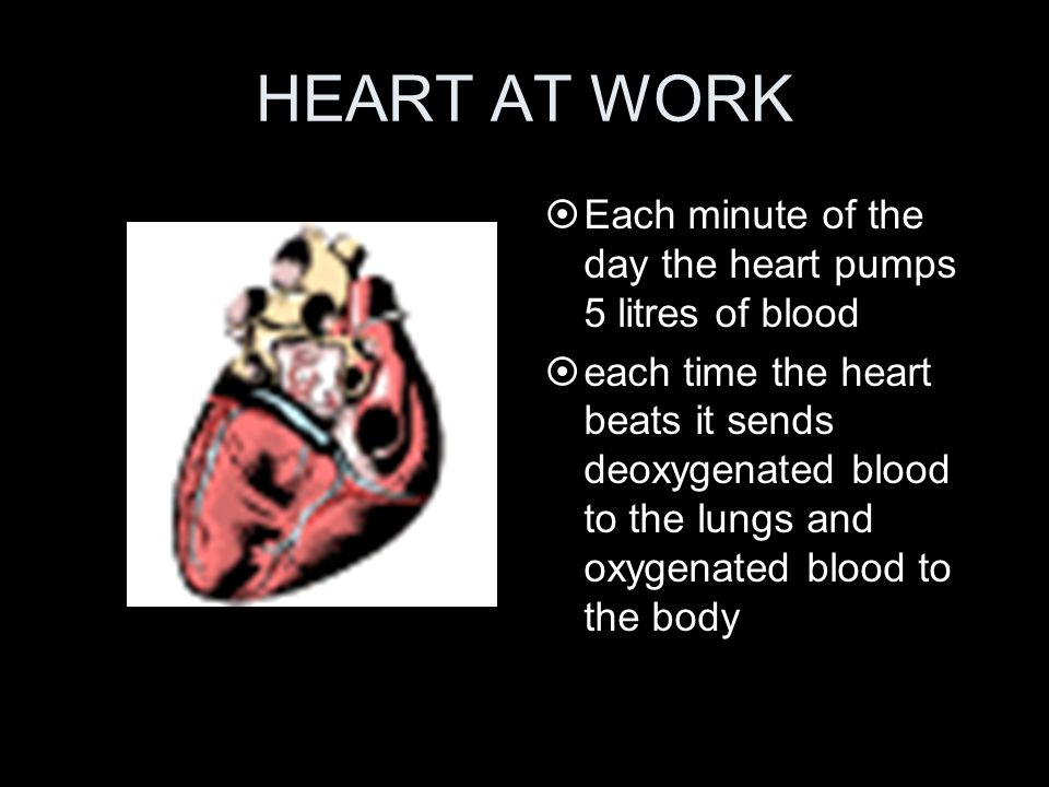 HEART AT WORK Each minute of the day the heart pumps 5 litres of blood
