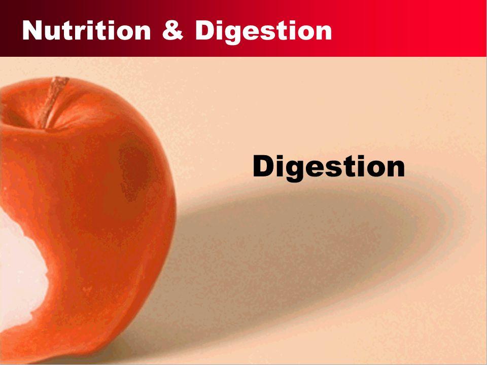 Nutrition & Digestion Digestion